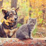 Casa rural con animales: 3 consejos para ir con ellos