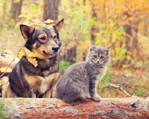 casa rural con animales