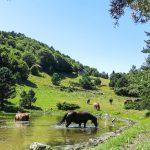 El Pirineo catalán, un paraíso por descubrir lleno de actividades