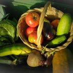 Huerto permacultura: diseña tu huerto pensando en las personas