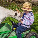 Granja per a nens, una forma divertida d'acostar-se als animals