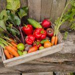 Productos naturales: hoy hablamos de permacultura