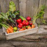 Productes naturals: avui parlem de permacultura