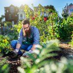 Huerto y jardín: cómo hacerlos compatibles