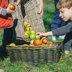 Fruta ecológica: qué es y principales beneficios