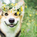 Flors de Bach per a mascotes quins són els seus beneficis?