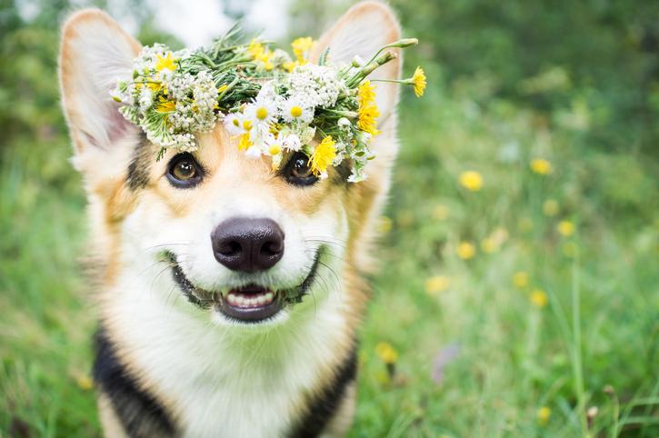 flores de bach mascotas