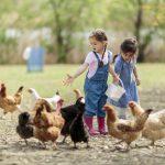 Hotel granja niños: 3 sugerencias para pasarlo genial