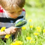 Educació ambiental: preguntes, respostes i exemples pràctics