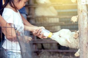 granjas para ir con niños