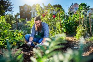 huerto urbano que plantar