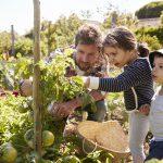 Cuina ecològica: en que consisteix i quins son els seus beneficis