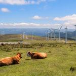 Carne ecológica: sus factores diferenciales y beneficios