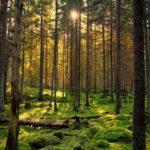 Tipos de árboles: características para aprender a diferenciarlos
