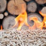 Qué es la biomasa y cómo aplicarla al turismo