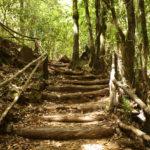 Ecoturismo en España: 5 lugares donde practicarlo