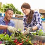 Biohuerto: qué es y claves para disfrutarlo en tu terraza