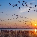 Turisme ornitològic: 3 llocs únics on gaudir-lo