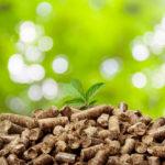 Energía con biomasa: fuentes vegetales y aplicaciones