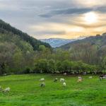 Experiencia rural: escapadas para un fin de semana