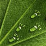 Huella ecológica en España: 7 datos que te sorprenderán