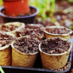 Qué plantar en primavera: 4 imprescindibles en tu huerto urbano y trucos para cosecharlos con éxito