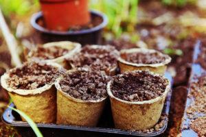 qué plantar en primavera