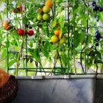 Beneficios huerto urbano: 5 ventajas de ponerlo en marcha