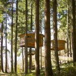 Cabanes als arbres: una manera d'allotjament diferent