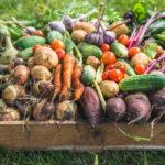 Consejos menú sostenible: ingredientes y recetas