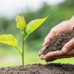 Desenvolupament sostenible: Definició i característiques