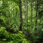 Baños de bosque: qué son y cómo hacerlos